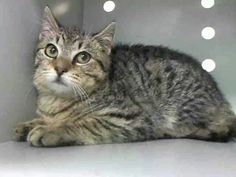 Just a 3 month old baby.please give him a chance at life instead of execution at the ACC shelter in New York City URGENT visit pets on death row on Facebook. He will die tomorrow at noon. ALTAIR is his name only 3 months old!!!