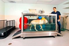 Underwater treadmill at Animal Surgical Clinic of Seattle - Merit Award in the 2012 Veterinary Economics Hospital Design Competition