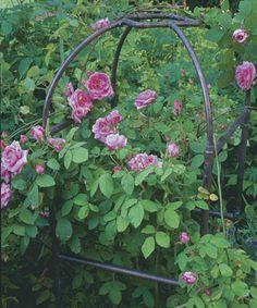 Build a Copper Pipe Trellis: Simple techniques transform plumbing pipes into functional garden structures. Learn how at http://www.finegardening.com/how-to/articles/build-a-copper-pipe-trellis.aspx