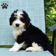50 Best Doodle Dogs Images Doodle Dog Dogs Puppies
