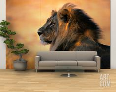 Adult Male African Lion Wall Mural – Large by Nicole Duplaix at Art.com Lion Wall Art, Mural Wall Art, 3d Wall, Lion Wallpaper, Home Wallpaper, Lion Poster, Elephant Poster, African Theme, Animal Photography