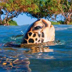 Turtle - Photo by clarklittle