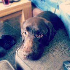 Our dog!!! Tigo!