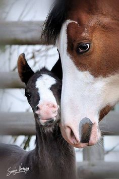 Horses - mom and baby. Too cute!