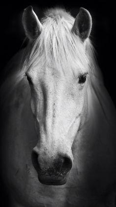 95 Best Horse Wallpaper Images Beautiful Horses Pretty Horses
