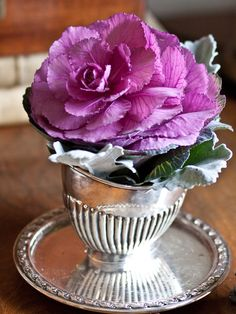 lovely purple cabbage plant nestled in a silver cup Flowering Kale, Cabbage Plant, Ornamental Cabbage, Winter Flowers, Thanksgiving Feast, Floral Flowers, Teacup Flowers, Arte Floral, Elegant Homes