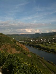 Vineyards of the Mosel valley.