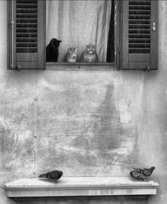 Wonder what those cats are thinking? Wonder what those cats are thinking? The post Louvered shutters. Wonder what those cats are thinking? appeared first on Katzen. Crazy Cat Lady, Crazy Cats, Big Cats, Cool Cats, Cats And Kittens, Kitty Cats, Animals And Pets, Cute Animals, Animal Gato