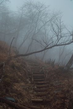 Foggy ath into the forest. Spooky Places, Autumn Aesthetic, Jolie Photo, Dark Forest, Forest Rain, Foggy Forest, Dark Side, Mists, Paths