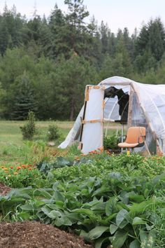 """Growing vegetables in the wilderness   Gardenista (""""make do with what you've got"""" is the order of the day)"""
