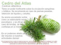 Aceite Esencial de CEDRO DEL ATLAS      100% Puro, Natural, Botanica y Bioquimicamente definido