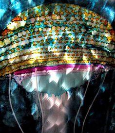 Art Conservation, Brushed Metal, Public Art, Jellyfish, Metal Art, Aquarius, Illustrations, Sculpture, Facebook