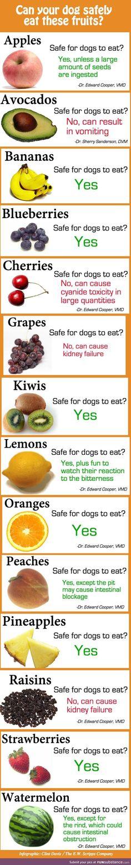 Keep your best friends safe