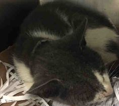 LEGOLAS - A1058500 - - Brooklyn  ***TO BE DESTROYED 11/25/15***LEGOLAS is just a 5 month old BABY and is already fighting for his rite to LIVE! He has a URI which can affect some of his behavior, though he's been really good with his assessor and even earned an AVERAGE rating, sick and all! Antibiotics can cure his URI but the only antidote to save his life is a FOSTER or ADOPTER! PLEASE, take this little guy in and give him a little space in your home and a big space