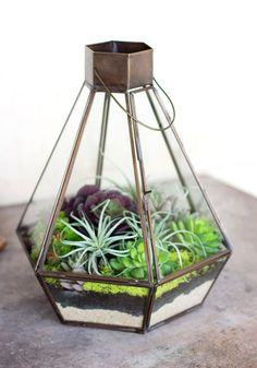 Terrarium - reminds me of a lantern - and you can hang it or place it on a table or shelf! Love the mix of succulents in this.