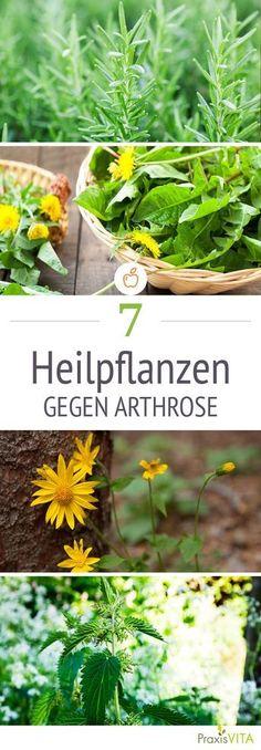 Hier erfahren Sie, welche Heilpflanzen bei Arthrose helfen und wie Sie Gelenkbeschwerden mit der Kraft der Natur lindern.