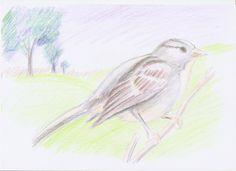 Com dibuixar un ocell...