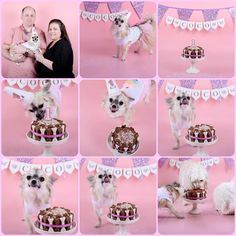 Puppy chihuahua cake smash 1st birthday