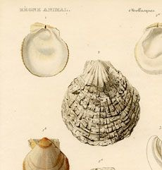 """Join 5 people right now at """"Sea Shells Pictures -Beautiful Printable French Art! French Images, French Art, Vintage Pictures, Vintage Images, Graphics Fairy, Printable Wall Art, Printable Vintage, Arts And Crafts, Art Crafts"""