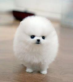 Cutest Fluffball!