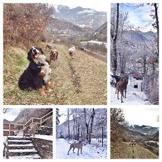 Campinh VERNEDA ❤️ dogs  #dogfriendly