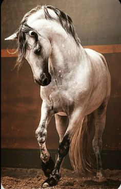 Horse Dance, Horse Art, Horse Photos, Horse Pictures, Most Beautiful Animals, Beautiful Horses, Equine Photography, Animal Photography, Horse Riding Quotes