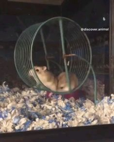 Tag a friend 🐹😂 Via – Tierisch – gitter Animal Jokes, Funny Animal Memes, Funny Animal Pictures, Cute Little Animals, Cute Funny Animals, Cute Cats, Hamster Foto, Funny Dog Videos, Funny Dogs