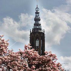 OLV Toren - Amersfoort - Bloesem