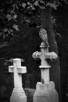 Well, this was too ridiculous to pass up: Gothic crosses in graveyard being sat upon by crow. Pretty awesome, really. Gothic Crosses, Gothic 4, Old Cemeteries, Graveyards, Crows Ravens, Cemetery Art, Memento Mori, Dark Art, Creepy