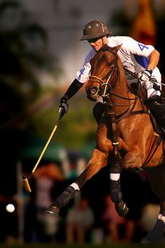 Beautiful Polo ♔nyRockPhotoGirl♔༺♥༻