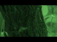 (昆虫バトル)スズメバチVS蝶-Wasp vs Butterfly - YouTube