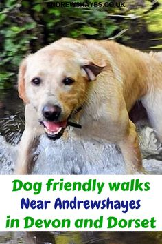 Andrewshayes Holiday Park has some Perfect Beautiful Relaxing East Devon Dog Pet Friendly WALKS for you all to go on. Enjoy the stunning Devon Countryside. Dog Friendly Holidays, Pet Dogs, Pets, Holiday Park, Dog Walking, Dog Friends, Caravan, Walks, Woodland