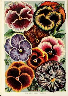 Childs' rare flowers, vegetables, and fruits