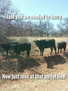 ❦  Cow troubles #10