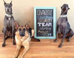 Now this would be a cute pregnancy announcement and I get to use our first babies!