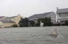 Hurricane Sandy virals: Sharks swimming in subway spark fears as internet users create superstorm memes - Mirror Online