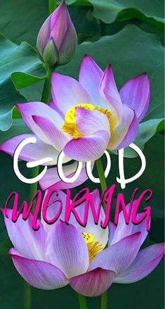 Good Morning Sister, Good Morning Prayer, Good Morning Happy, Good Morning Greetings, Morning Prayers, Morning Wish, Good Morning Ladies, Good Morning Flowers Quotes, Sunday Morning Quotes