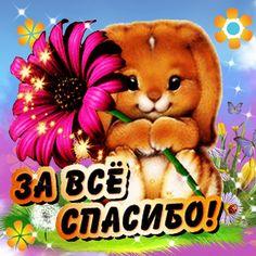 Teddy Bear, Toys, Memes, Cards, Animals, Fun Things, Psychology, Thanks, Amor