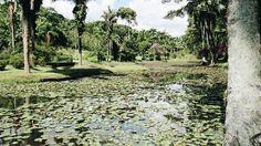 Jardim Botânico de SP - Um Refúgio da Natureza - Senhora Bagunça DIY
