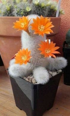 Beautiful Flowers Photos, Exotic Flowers, Flower Photos, Diy Flowers, Purple Flowers, White Flowers, Succulent Gardening, Cacti And Succulents, Planting Succulents