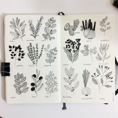 simple, clean depictions of herbs | will include their scientific names and uses || @qavee