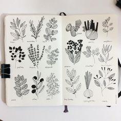 Planta arbolario moleskine libreta dibujo negro boli