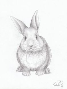 Marvelous Drawing Animals In The Zoo Ideas. Inconceivable Drawing Animals In The Zoo Ideas. Animal Sketches, Drawing Sketches, Art Drawings, Animal Pencil Drawings, Sketching, Bunny Sketches, Rabbit Drawing, Rabbit Art, Cute Bunny Pictures