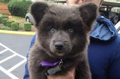 19 Puppies Who Might Actually Be Bear Cubs