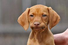 Unamused Puppy | Cutest Paw