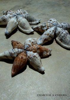 Seashell Stars--an idea for Christmas near the beach?  Charcoal and Crayons:
