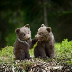 These cubs remind me of the Little Bear books I read when I was young.