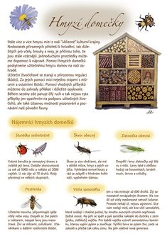 Kartičky návrhy — KT gardens ktgardens Bug Hotel, Land Art, Growing Plants, Spring Crafts, Jewel Tones, Indoor Plants, Garden Design, Diy And Crafts, Projects To Try