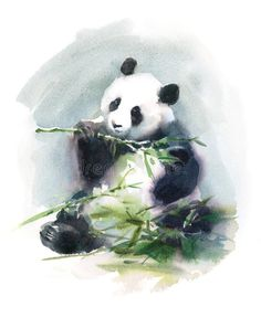 Panda Eating Bamboo Watercolor Animal Illustration Hand Painted Stock Illustration - Illustration of fluffy, white: 65536983