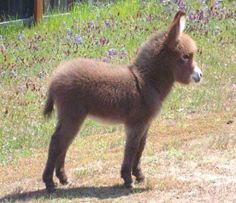 Baby Donkey omg I just died lol